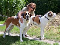 The author, Diana Lambdin Meyer, gets acquainted with Hoxane and Rangoon before their walk in the woods behind Barryland in Martigny, Switzerland.(Bruce N. Meyer)