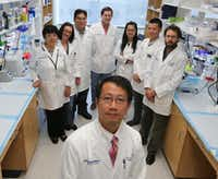Dr. Lu Le of UT Southwestern Medical Center discovered a chemical and biological process that could explain gray hair and balding in people. Members of his team are (from left) Yong Wang, Tracey Shipman, Chung-Ping Liao, Jonathan Cooper, Juan Mo,  Zhiguo Chen and Jean-Philippe Broadway. (Ron Baselice/Staff Photographer)