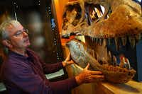 Rick Rolater with a Tyrannosaurus Bataar skull displayed in his Colorado gallery in 2007.(Jordan Curet/AP)