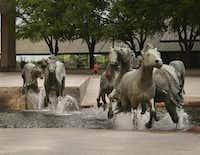 Irving's iconic mustang statues.(Ron Baselice/Staff Photographer)