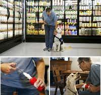 Bev Swartz of All Purpose Canines corrects Callie during training at a local grocery store (top) in Ranger. That same day, she used a white washcloth with a low blood sugar scent on it to train Callie to be a diabetic alert dog for Brian Ellis.(Vernon Bryant/Staff Photographer)