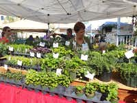 A merchant sells herbs and greens at the Covington Farmers Market in Covington, La. The market is open every Saturday from 8 a.m. until noon. (Helen Anders)