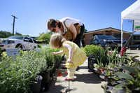 Erin Choen, 2, browses pots of rosemary plants with her mother, Jennifer Cohen, at the St. Michael'•s Farmers Market.(Ben Torres/Special Contributor)