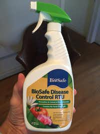 BioSafe Disease Control is one commercial organic product that can be used to get rid of black spot mold.