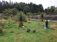 The Bird Lady of the Te Anau Bird Sanctuary feeds three rare flightless Takahe  birds. Only 300 remain on earth.(Joe Nick Patoski/Special Contributor)