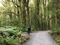 A walk through the rainforest on the way to the Chasm pools off the road to Milford Sound.(Joe Nick Patoski/Special Contributor)