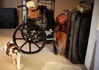 Sacharazonta Rooters' cat, Alana, walks past belongings packed up in the living room. Rooters has been in limbo since her apartment complex filed for eviction in July. (Rose Baca/Staff Photographer)