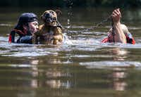 Marine Corps League member Jeff Webb, left, of Montgomery, Texas, and rescue diver Stephan Bradshaw, right, of South Carolina rescue a dog that was chained to a flooded porch as a result of Tropical Storm Harvey on Thursday, August 31, 2017 in Lumberton, Texas.(Ashley Landis/Staff Photographer)