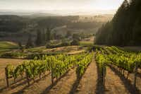 Domaine Nicolas Jay grapes come from their estate vineyard, Bishop Creek Vineyard in the Yamhill Carlton AVA of the Willamette Valley. (Domaine Nicolas Jay)