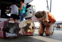<p>Jennifer Bane of Katy examines a cat for identifying marks to add to its paperwork on Sept. 3 at a makeshift tent city for animals run by Austin Pets Alive! in Katy. The nonprofit group is working on getting pets to their families as well as keeping the pets alive.</p>(Vernon Bryant/Staff Photographer)