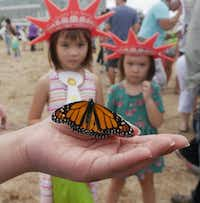 Children watch a monarch butterfly at the Flight of the Monarch Celebration at Central Park in Grand Prairie.(Ron Baselice/Staff Photographer)