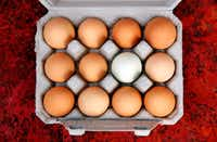A fresh dozen eggs are placed in a carton and chilled on the Bois d'Arc farm in Allens Chapel.(Tom Fox/Staff Photographer)