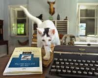 "Patches, one of the in residence at the Ernest Hemingway Home & Museum in Key West, Fla., prowls through the late author's writing room in  July 13, 2002 file photo, between Hemingway's typewriter and his classic, ""The Old Man and the Sea."" (ROBERTO RODRIGUEZ/AP)"