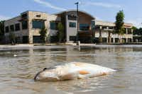 Floodwater from Hurricane Harvey begin to recede in shopping center in Kingwood, Texas, Thursday, Aug. 31, 2017. (Scott Clause/The Daily Advertiser via AP)(Scott Clause/AP)