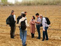 Visitors from the Czech Republic learn about vine-tending methods at a Chinese winery.(EasyTourChina.com)