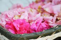 Rose petals for making rose water(Clare Miers/Special Contributor)