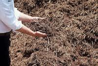 Shredded cedar is one of the best mulches.(Howard Garrett/Special Contributor)