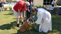 "<p><span style=""font-size: 1em; background-color: rgb(255, 255, 255);"">Rockwall Pets will be at </span><span style=""font-size: 1em; background-color: transparent;"">Sunday's blessing of the animals at First Presbyterian Church of Rockwall from 2 to 4 p.m. (File Photo/Rockwall Pets)</span></p>"