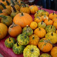 "<p><span style=""font-size: 1em; background-color: transparent;"">These are pumpkins from Fisher Family Farm and Ranch in Fruitvale.</span></p>(Kim Pierce/Special Contributor)"