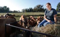 Kim Lambert sits beside some of her cows in Paradise on  Oct. 13, 2017. K-Bar Dairy is a small, family-operated dairy farm in Wise County that produces raw milk.(David Woo/Staff Photographer)
