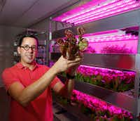 Bullion general manager Victor Rojas holds Little Gem lettuce, which is grown in the restaurant's hydroponics vertical garden.(Ron Baselice/Staff Photographer)