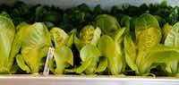 Little Gem lettuce is among the plants in Bullion's hydroponics vertical garden.(Ron Baselice/Staff Photographer)