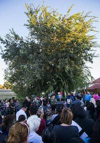 People gather at a memorial for Sherin Mathews on Sunday at a tree behind her home.(Ashley Landis/Staff Photographer)