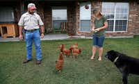 Kaufman County resident John Bomer watches his wife, Kristina, feed their chickens in the backyard at their home near Forney. Rural residents have expressed concerns that after Mesquite's previous annexations, its code enforcement imposed city rules that took away the country lifestyle they had sought when they purchased their homes.(Jae S. Lee/Staff Photographer)