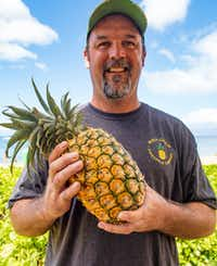 "<p><span style=""font-size: 1em; background-color: transparent;"">Maui Gold pineapple plantation owner Darren Strand says his Maui-grown pineapples taste uniquely Hawaiian.</span></p>(MICHAEL HILLER)"