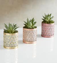 Metallic Succulent Trio, 1800Flowers.com(1800Flowers.com)