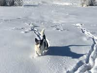 Director of pet relations, Sammy, has time off from work at the Waldorf Astoria Park City.(Waldorf Astoria Park City)