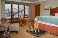 Pup pillow service at the Pines Lodge, Beaver Creek(Ric Stovall/Vail Resorts/Beaver Creek)