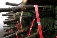 Tags hang from freshly harvested Christmas trees at Holiday Tree Farms in Philomath, Ore. (Justin Sullivan/Getty Images)