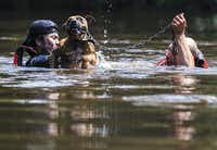 <p>Marine Corps League member Jeff Webb (left) of Montgomery and rescue diver Stephen Bradshaw of South Carolina save a dog that had been left chained to a porch in Lumberton as Harvey floodwaters rose.</p>(Ashley Landis/Staff Photographer)