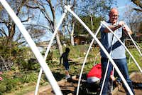 Daniel Cunningham puts up a garden cover using PVC pipe at Sunny South Community Garden in Dallas.(Nathan Hunsinger/Staff Photographer)