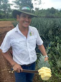 Isaac Bustos Boza, farm manager at Valle del Tarso, a certified organic enterprise In Upala, Costa Rica, offers a pineapple plucked from the fields and deftly sliced with his machete. Bustos, an agronomist, strives to improve organic methods, experimenting with converting waste pineapple material into natural fertilizer.(Richard Read/Nerd Wallet)