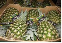 """<p>Large """"five count"""" pineapples struck Beesley as a red flag.</p>(USDA photo)"""