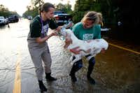 Cheri Deatsch (left) and Missy Hargraves put a lead on a dog rescued from Hurricane Harvey floodwaters in Vidor.(File Photo/Nathan Hunsinger)