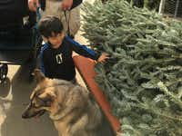 Luca Romero shops for a Christmas tree with his family's German shepherd. (Allis Cho)
