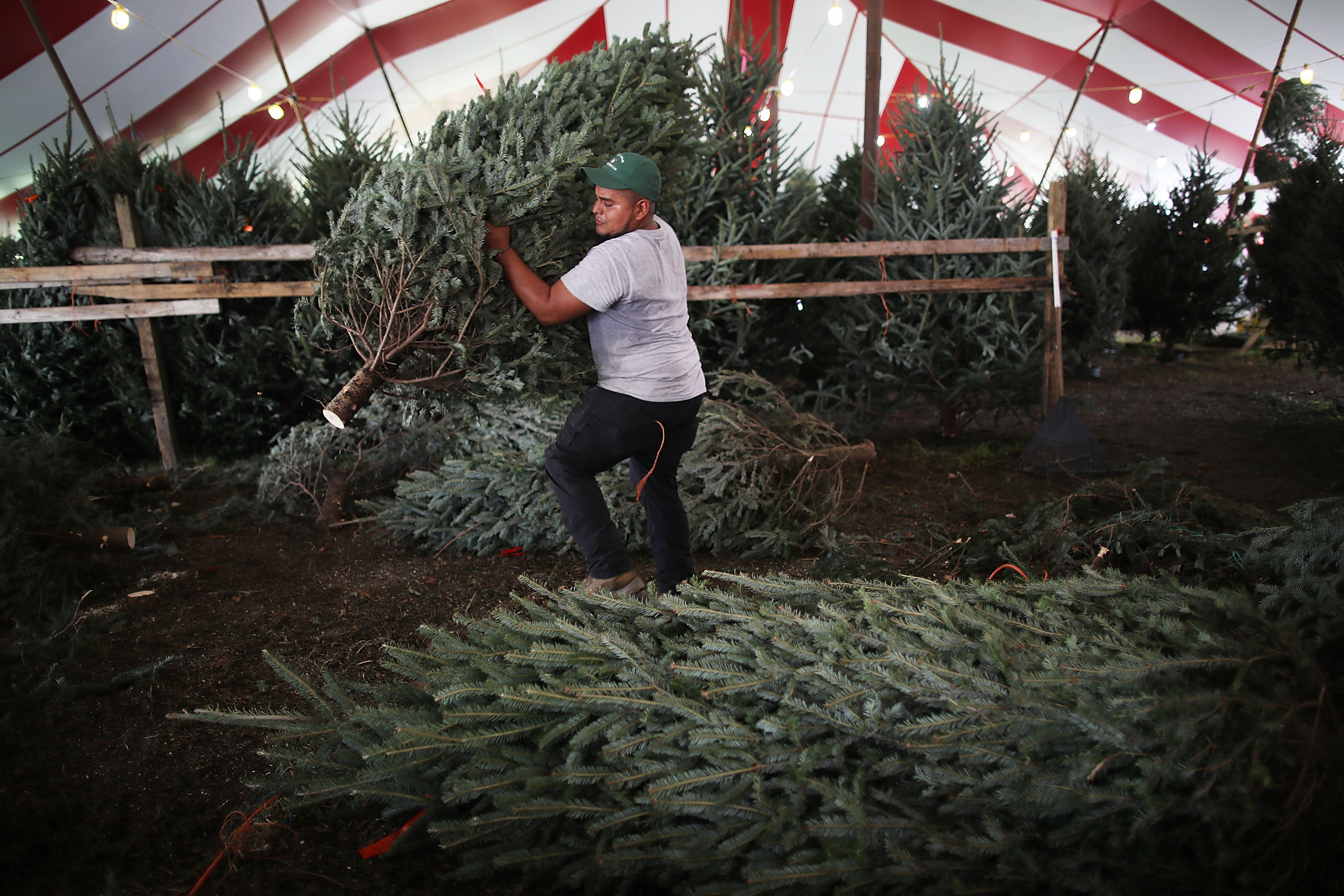 Fort Worth Trash Pickup Schedule Christmas 2020 What to do with your tree in Dallas Fort Worth now that Christmas