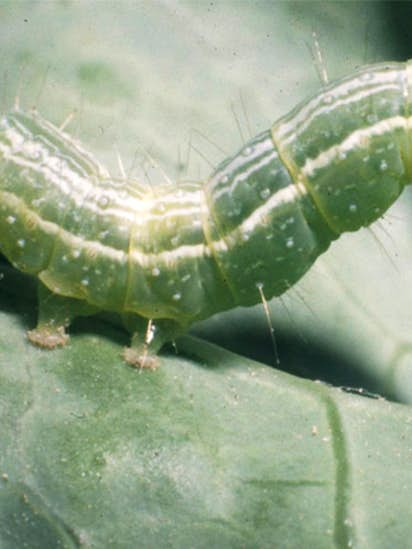 5 annoying bugs to watch for in Texas gardens this spring