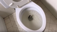 In a still image from Tedrick's YouTube video, the snake begins to slither from the toilet.<br>(William B. Tedrick<br>/YouTube)