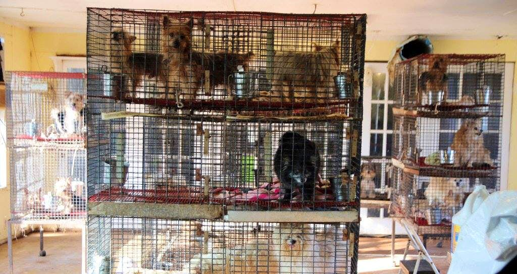 Texas SPCA seizes 138 dogs from Fannin County puppy mill