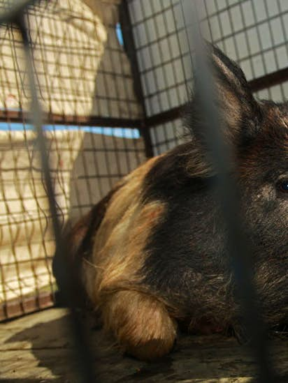 Texas must get a grip on the wild hog problem, and here's how