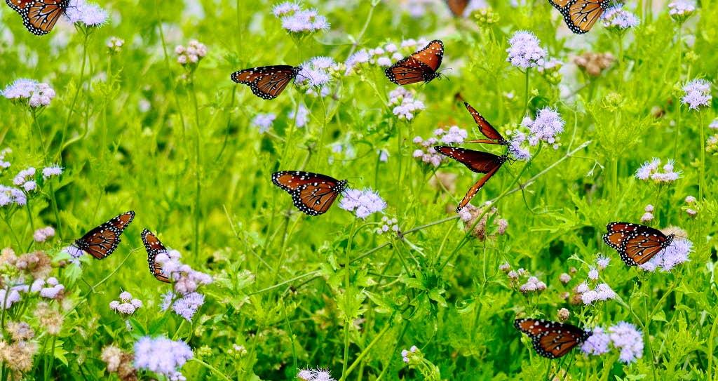 5 Texas garden trends you\'ll see in 2018 | Gardening | Dallas News