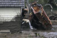 In this photo provided by Santa Barbara County Fire Department, Santa Barbara County Fire Search Dog Reilly looks for victims in damaged and destroyed homes in Montecito, Calif. following deadly runoff of mud and debris from heavy rain on Tuesday, Jan. 9, 2018.(Mike Eliason/Santa Barbara County Fire Department)