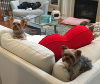 "McBee's dogs, Eloise and Penelope, ""contributed"" to the operation.(Erin Sood)"