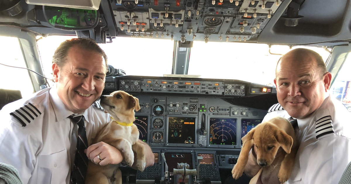 Southwest airlifts 62 puppies and kittens out of hurricane-hit Puerto Rico