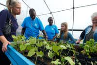 Suzanne Massey, (from left) Charles Bryant, Anzinette Carter, Harper Massey, 11, and Susan Blackburn talk in the greenhouse during the opening of MLK Jr. Freedom Garden and Seedling Farm in Dallas.(Nathan Hunsinger/Staff Photographer)