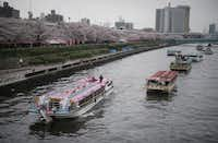 A tourist boat passes by other boats staying near the cherry blossoms in full bloom along the Sumida River in Tokyo. While beach destinations remain popular for spring break, travel agents say customers are also demanding unique cultural experiences and active outdoorsy adventures.(Eugene Hoshiko/AP)